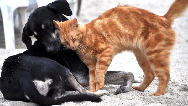 chien et chat.jpg